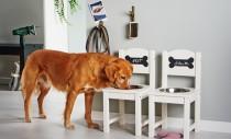Sufragerie si bucatarie: bol pentru caini
