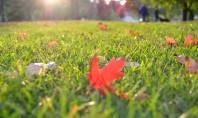 Întreținerea gazonului toamna în vederea pregătirii pentru sezonul rece Eliminarea mușchilor Zonele umbrite ale peluzei pot