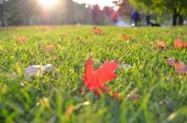 Întreținerea gazonului toamna în vederea pregătirii pentru sezonul rece