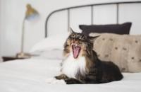 Idei pentru acasă: cum să ai un spațiu mai confortabil pentru pisica ta  Iata cateva idei despre modul in care poti face apartamentul tau un adevarat loc de joaca pentru pisica sau de ce nu, pentru pisici.