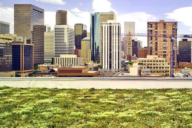 După Franța, încă un oraș ar putea avea acoperișuri verzi pe clădiri