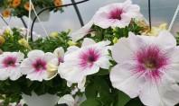 Serele cu frumuseti va asteapta! An de an Biosolaris Producator de Plante are in portofoliul sau
