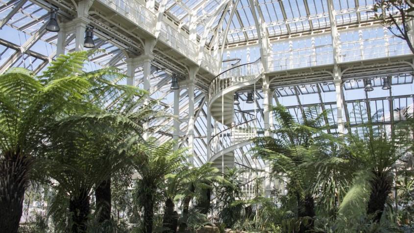 Spectaculoasa Temperate House, cea mai mare seră victoriană din lume, s-a redeschis