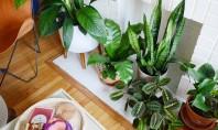 Da există și tendințe pentru plantele de apartament - ce se recomandă în 2018? Curiozitatea ne-a