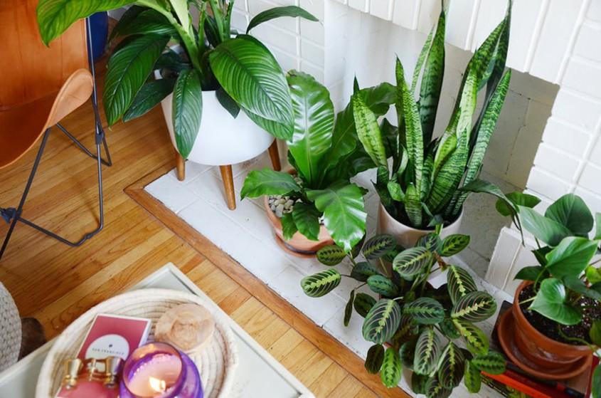 Da, există și tendințe pentru plantele de apartament - ce se recomandă în 2018?