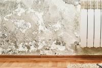 Soluția garantată pentru a scăpa de mucegai