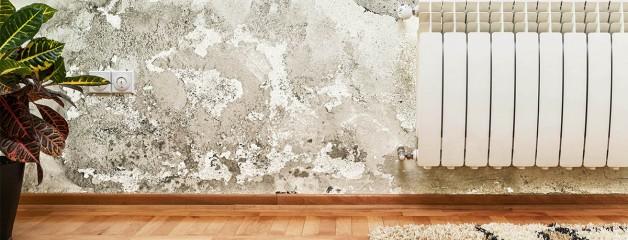 Soluția garantată pentru a scăpa de mucegai! (2)