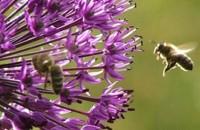 Tipologia de Gradina WILDLIFE - amenajare peisagistica pentru sustinerea vietii salbatice