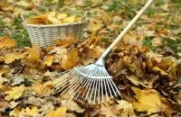 Lucrări în grădină - ce ai de făcut în noiembrie?