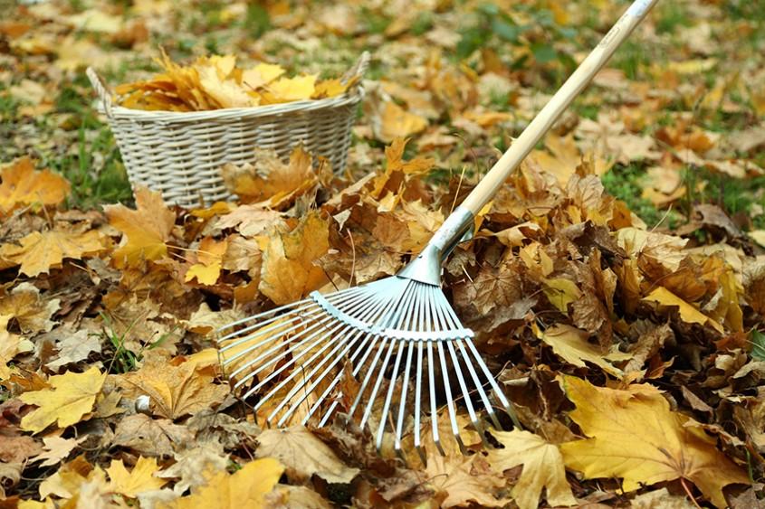 Ce ai de făcut în noiembrie în grădină?