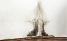 Care sunt cauzele mucegaiului și cum luptăm împotriva lui