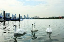 Lebedele robotice folosite pentru a monitoriza calitatea apei potabile din Singapore