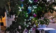 Altfel de pomi de Crăciun Închiriați de sărbători și plantați de-a lungul străzilor după Friends of