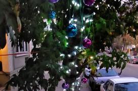 Altfel de pomi de Crăciun: Închiriați de sărbători și plantați de-a lungul străzilor după