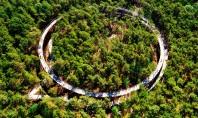 """Pedalând printre coroanele copacilor O pistă pentru biciclete construită la înălțime în pădure Numita intuitiv """"Pedaland"""