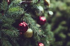 Brad de Crăciun natural sau artificial? Alegerea cea mai prietenoasă cu natura este mai complicată decât crezi