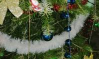 Brad de Crăciun natural sau artificial? Ce să alegi anul acesta Profesor de horticultura si silvicultura