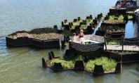 Un parc plutitor făcut în întregime din plastic reciclat Proiect al Fundatiei Recycled Island Recycled Park