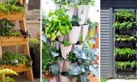 Mini-grădini de legume pentru începători Gradinile verticale de legume reprezinta o varianta optima pentru cei care