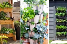 Mini-grădini de legume pentru începători