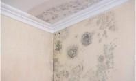 Probleme cu mucegaiul? Plăcile din plută expandată montate pe pereți sunt soluția Petele de calciu sunt