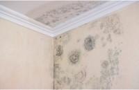 Probleme cu mucegaiul? Placile din pluta expandata montate pe pereti sunt solutia