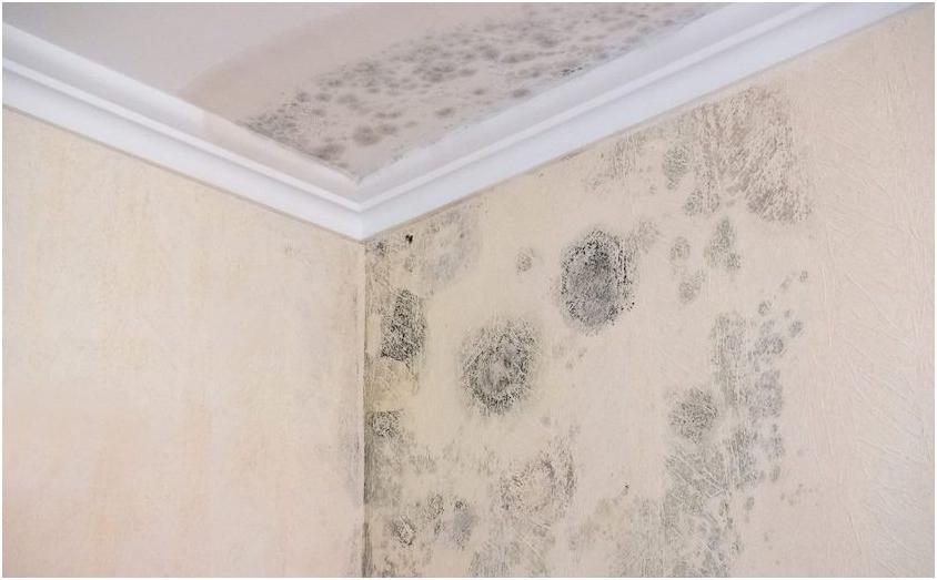 Probleme cu mucegaiul? Plăcile din plută expandată montate pe pereți sunt soluția