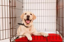 3 lucruri de care să ții cont când alegi cușca pentru câinele tău