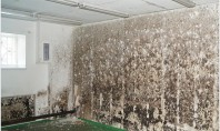 De ce apare mucegaiul în casă? Mucegaiul este o ciuperca care apare sub forma de depuneri