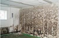 De ce apare mucegaiul în casă?
