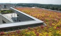 Argumente in favoarea unui acoperis verde Aspect imbunatatit protectia hidroizolatiei habitat pentru plante si animale imbunatatirea