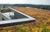 Argumente in favoarea unui acoperis verde