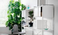 Cele mai potrivite plante pentru interioarele din apartamentele noastre Principalul element care impune selectia plantei este