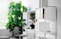 Cele mai potrivite plante pentru interioarele din apartamentele noastre Principalul element care impune selectia plantei este cantitatea de lumina naturala de care dispunem in apartament.