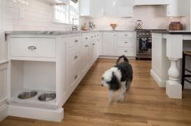 Sugestii de depozitare: unde pastram castroanele cu mancare ale animalelor de casa?