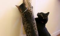 Bricolaj pentru iubitorii de pisici suport pentru ascutit ghearele Daca sunteti posesorii unei pisicute atunci cu