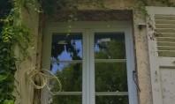 De ce să alegem ferestre din lemn stratificat? Arborii susțin viața prin rădăcini care absorb apa