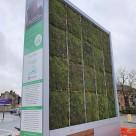 Peretele verde care purifică aerul cât o pădure