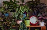 """Viaţa """"secretă"""" a plantelor noastre (Video)"""