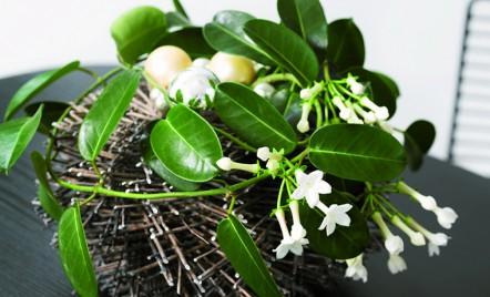 Top 5 plante recomandate pentru apartament
