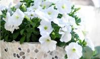 Ghiveci decorat cu pietre Un ghiveci de flori predominant alb va fi un accent plin de