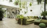 Greenery culoarea anului 2017 - cum o integrezi in amenajarea locuintei? Pentru interior nuanta de verde