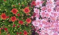 Plante de sezon la Biosolaris Nu le rata! La serele Biosolaris Producator de Plante toata lumea