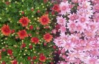 Plante de sezon la Biosolaris. Nu le rata! La serele Biosolaris Producator de Plante toata lumea gaseste ce cauta si e impresionata de calitatea si de preturile plantelor de sezon.