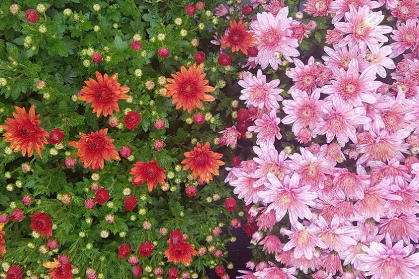 Plante de sezon la Biosolaris. Nu le rata!
