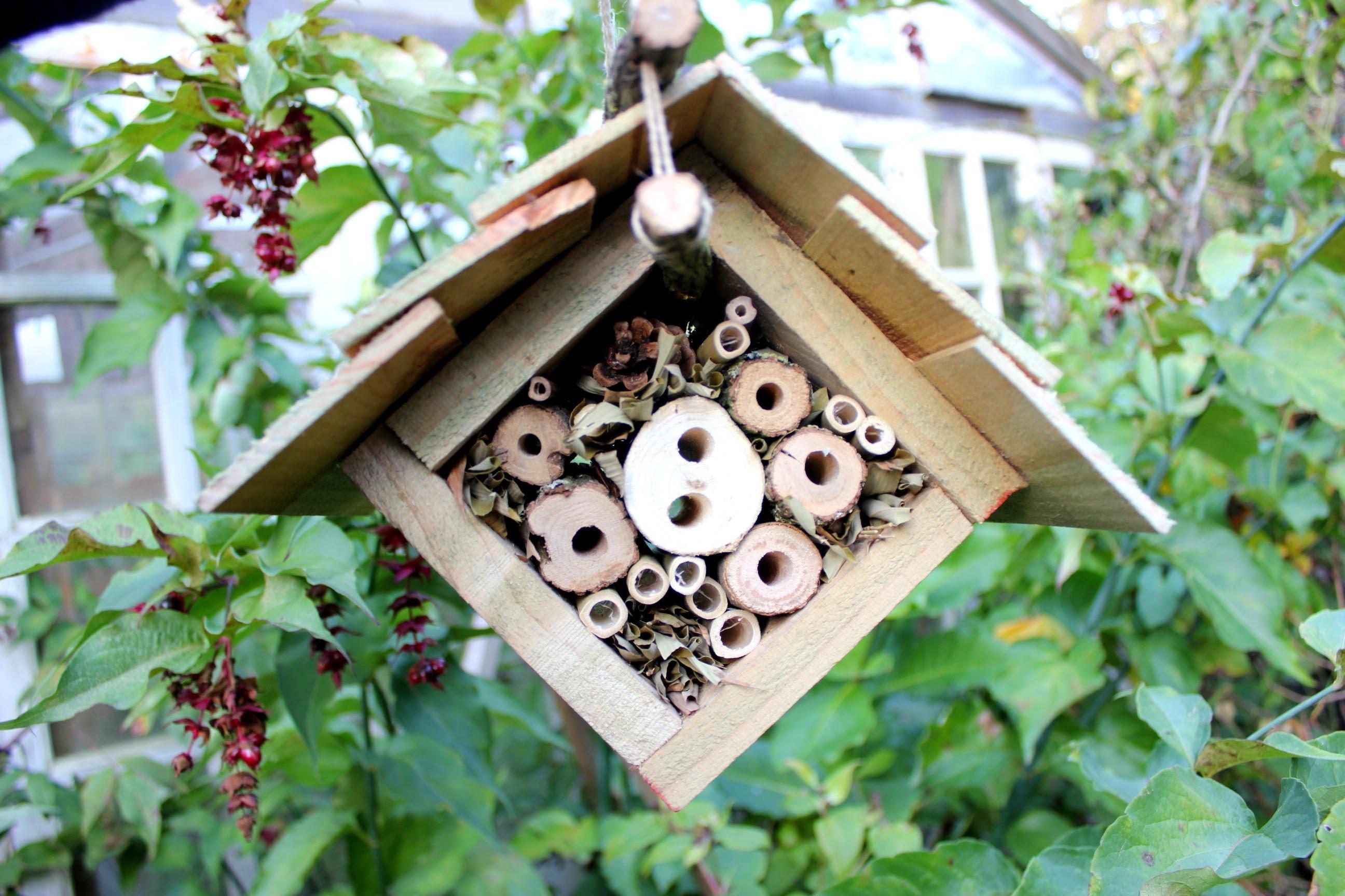 De ce ar trebui să ai un hotel pentru buburuze în grădină