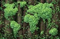 """Ecologizarea Pământului ar putea combate schimbările climatice la fel de eficient ca și reducerea combustibililor fosili. """"Daca suntem seriosi in ceea ce priveste schimbarile climatice, atunci vom fi nevoiti sa ne grabim sa investim in natura"""", a declarat Mark Tercek, CEO al The Nature Conservancy."""