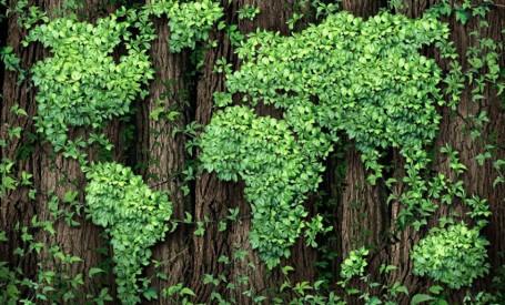 Ecologizarea Pământului ar putea combate schimbările climatice la fel de eficient ca și reducerea combustibililor fosili.