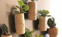 Suporturi magnetice pentru plante suculente Ce se poate spune despre acest proiect? Putem incepe cu faptul