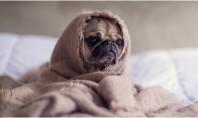 Stări apatice și oboseală Legătura cu aerul din locuința ta și soluții Astfel de simptome pot
